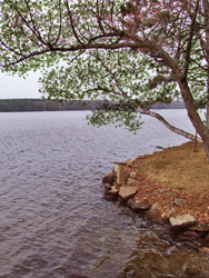 Mazinaw Lake 1